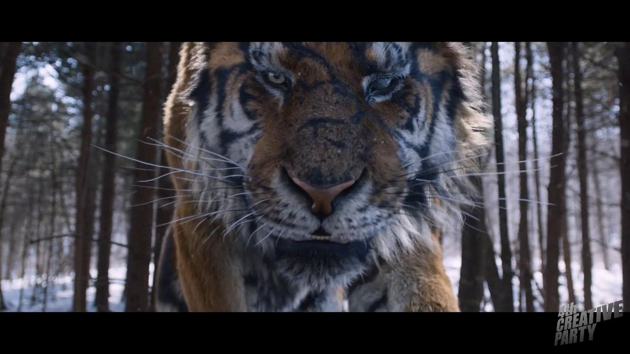 Amazon.com: Tale of a Tiger (9780961801205): Robert T ...